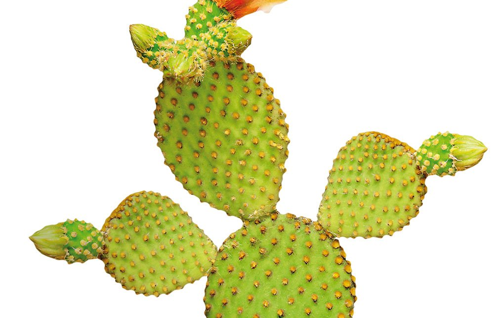 LGS-Kaktus