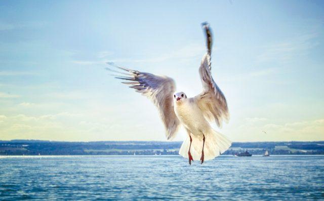 vergissmeinnicht_IBT-Bodenseetourismus