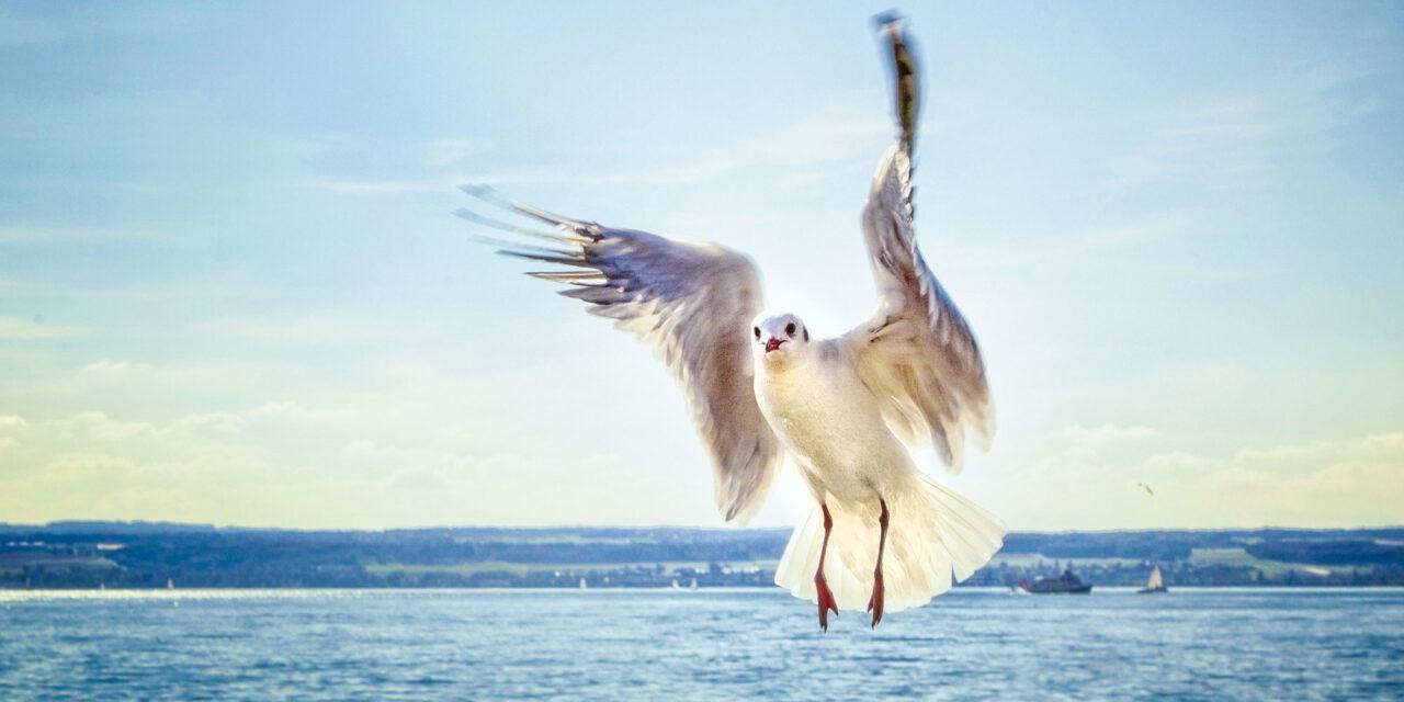 vergissmeinnicht_IBT-Bodenseetourismus2